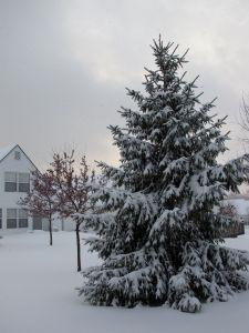 winterbackyard