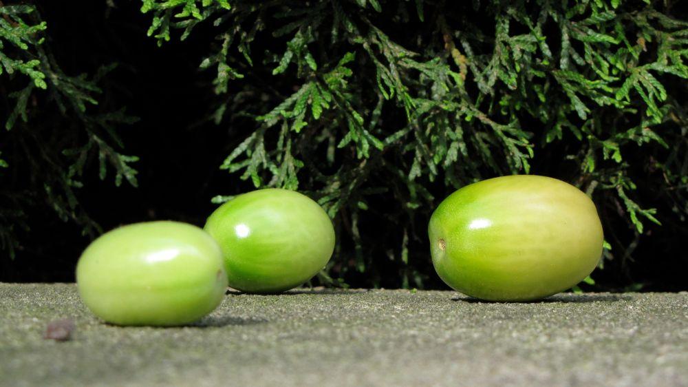 greents