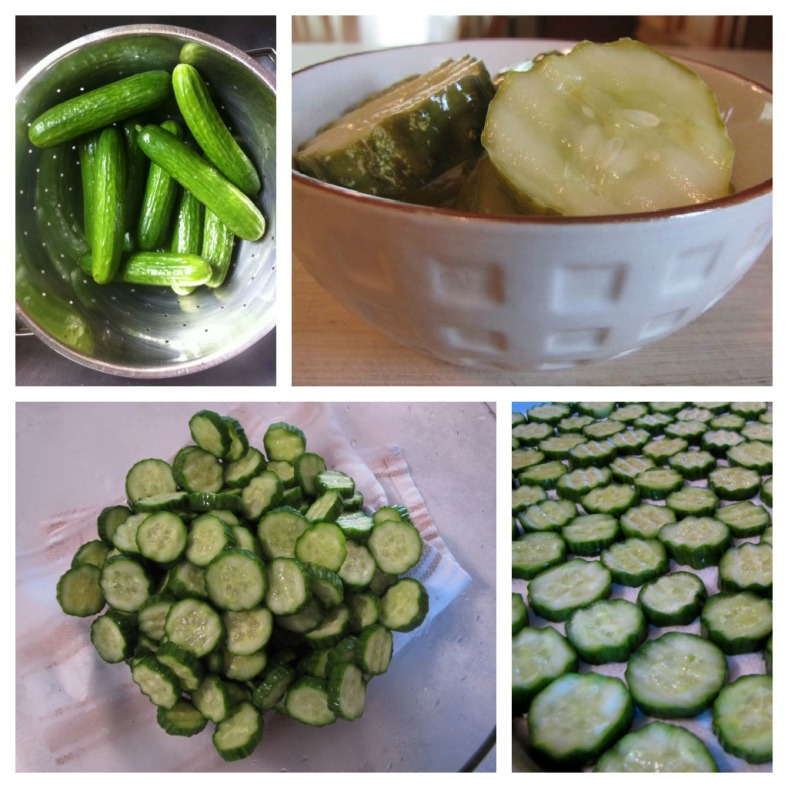 pickleCollage1